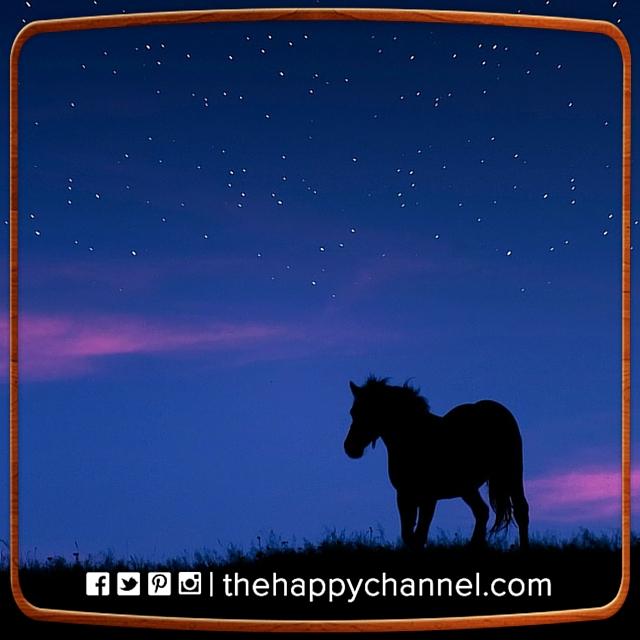 HorseNightSky.jpg