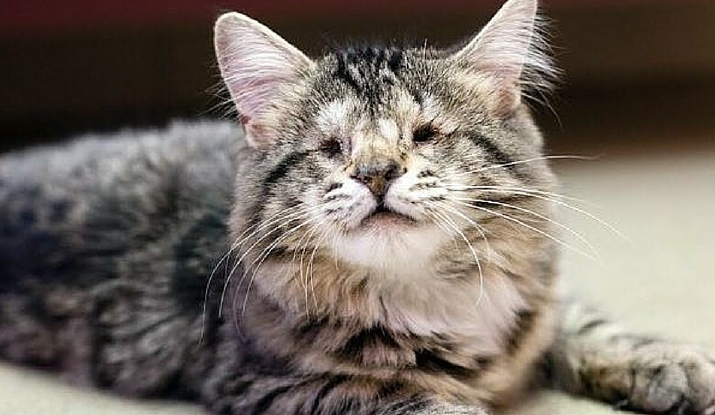 Cat Born With No Eyes Gets A Second Chance At Finding Happiness