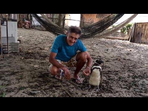 Would You Befriend a Penguin?