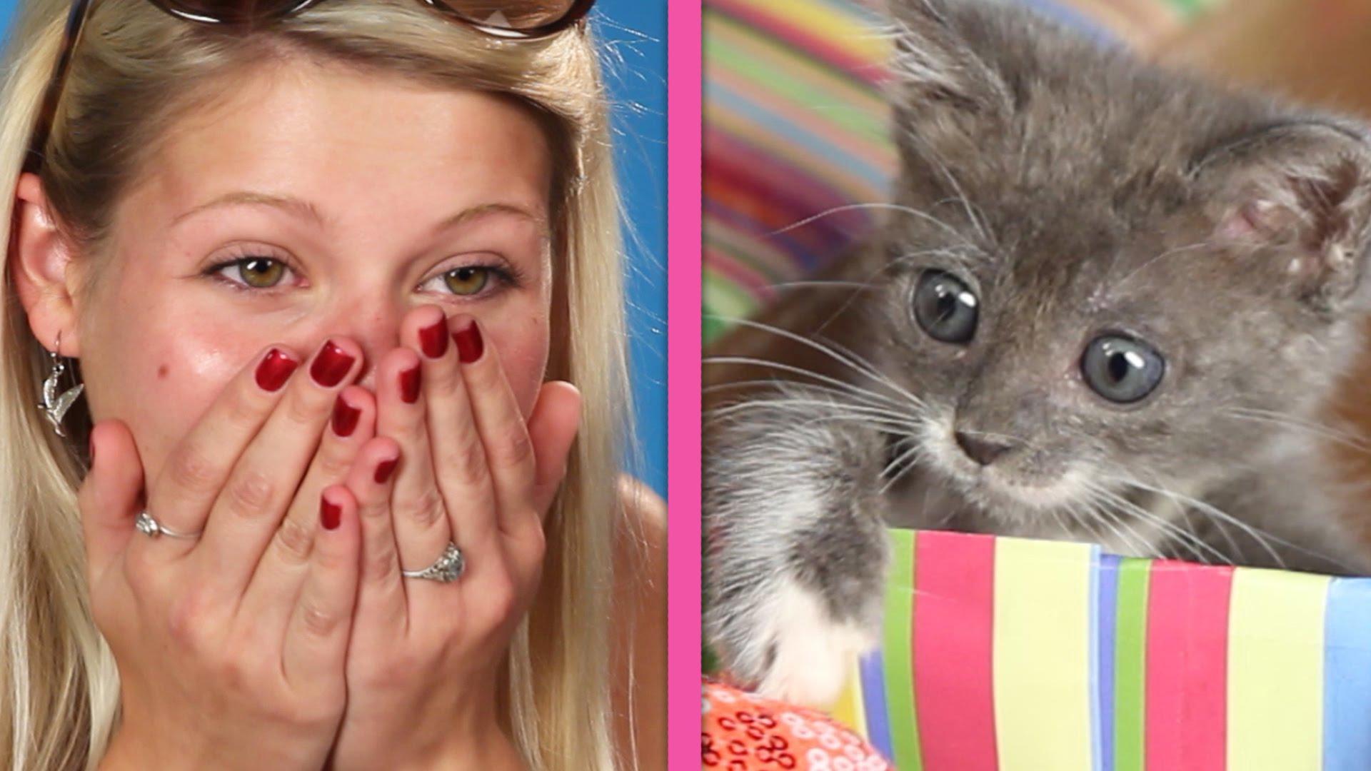 Surprise Kittens!
